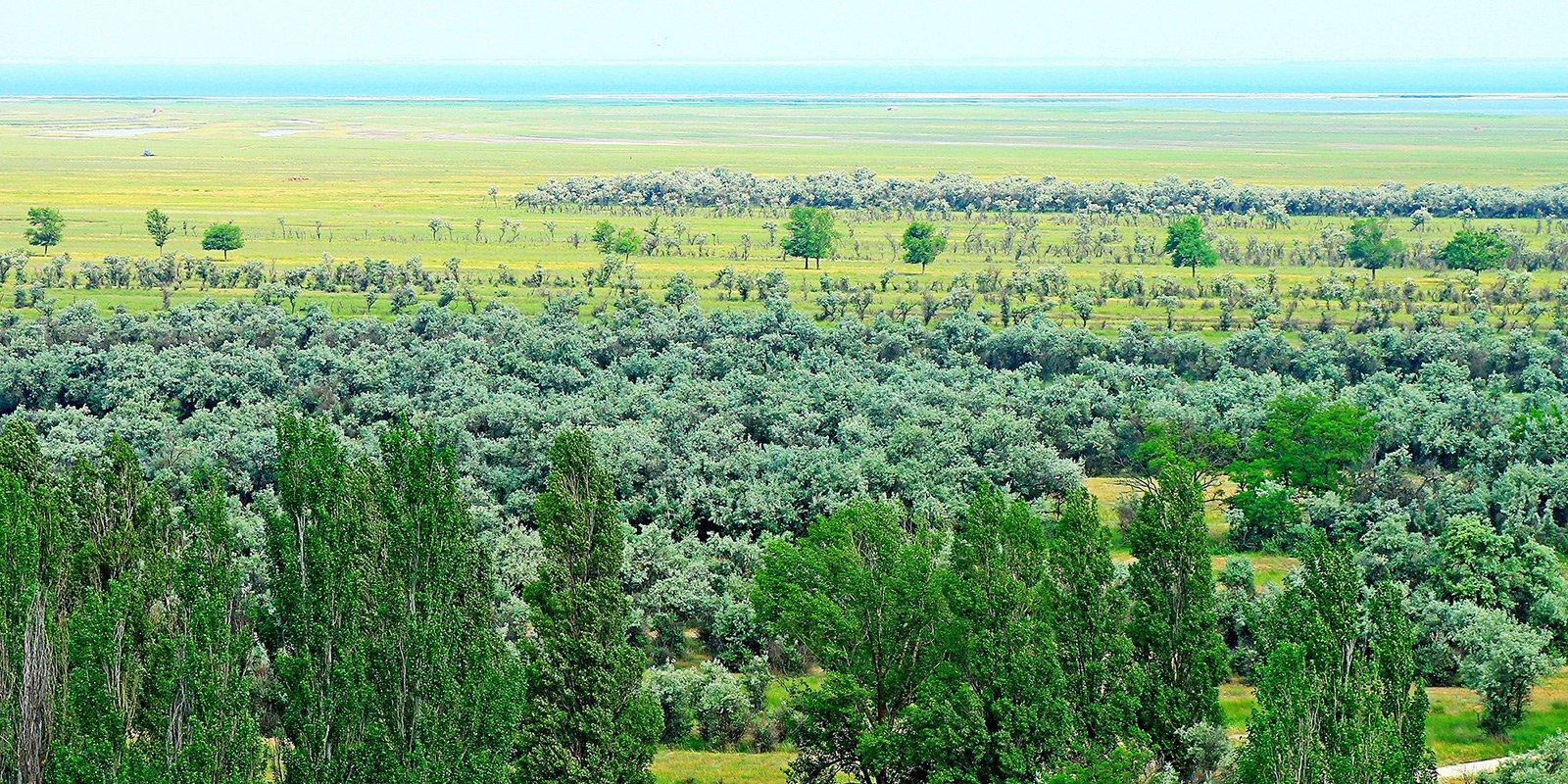 Бірючий острів - перлина Азово-Сиваського національного заповідника