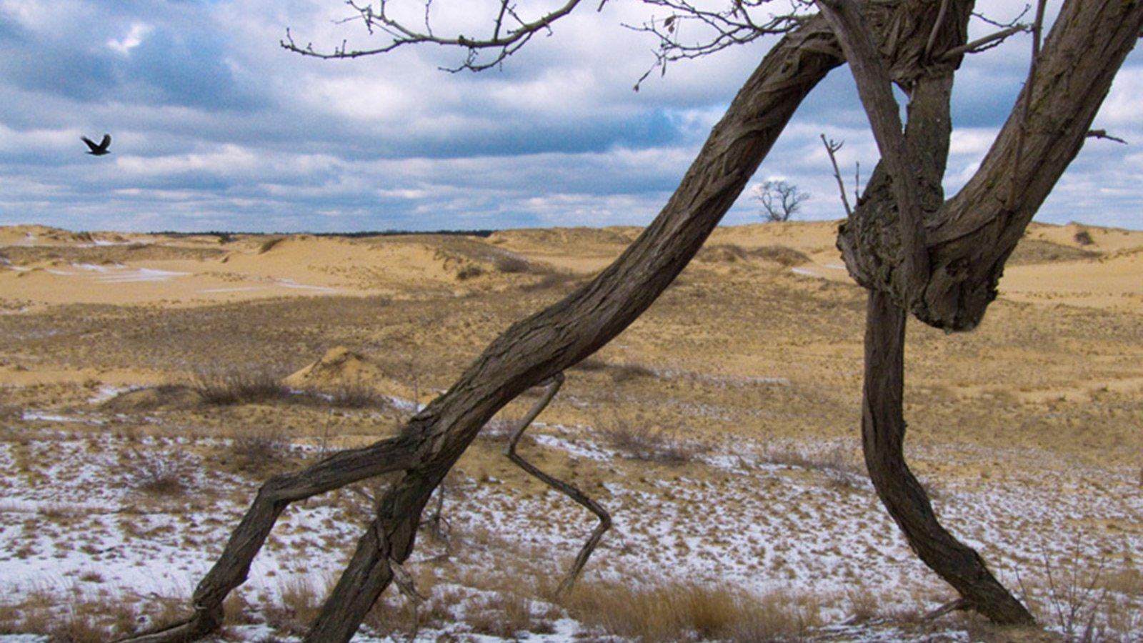 """Олешківські піски є безкраї бархани, висотою метрів по п'ять, які під дією вітру потроху пересуваються, """"повзають""""."""