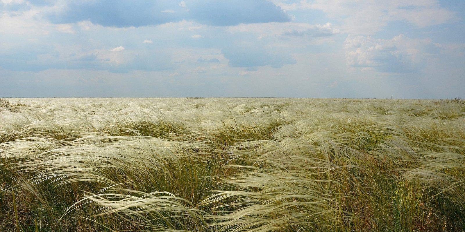 70% рослинності заповідника складають різні види ковили,   який сам по собі вважається зникаючим видом.   В квітні-травні оксамитова ковила перекочується    хвилями під подихом степового вітру.