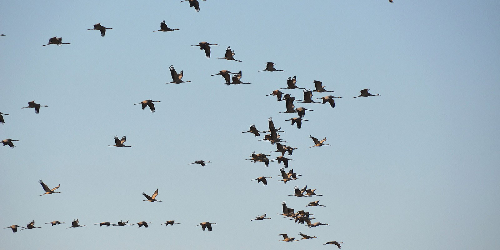Вражають своєю різноманітністю птахи, які гніздяться на території Асканії-Новій або зупиняються тут під час сезонних міграцій: білі та чорні лебеді, фламінго, журавлі, дрохви, стрепети, сірі куріпки, степовий орел.