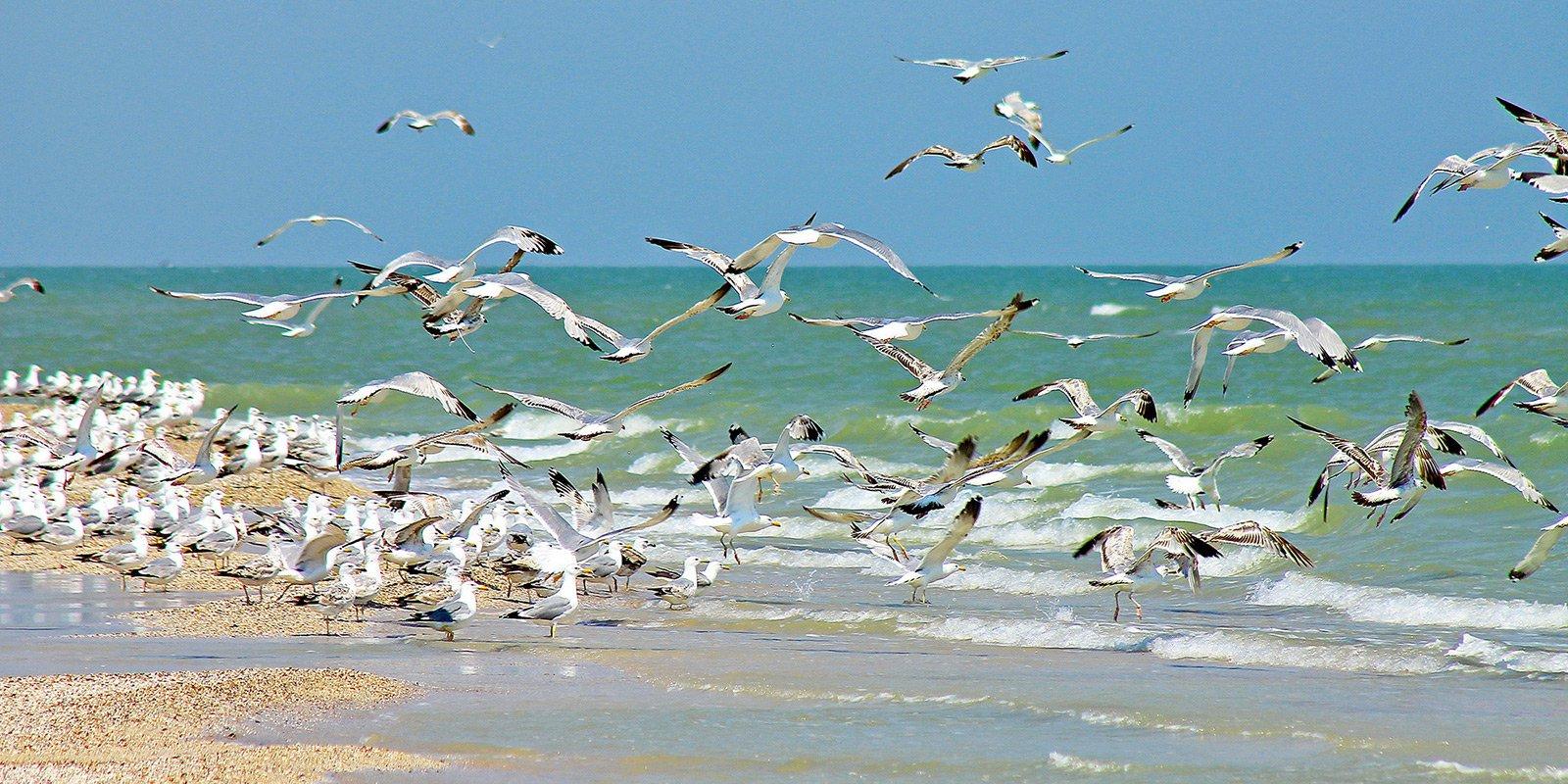 Через острів Бірючий пролягає перелітний шлях птахів. Навесні і восени біля берегів і на лиманах збираються величезні зграї водоплавної птиці: кулики, чайки, казарки та інші.