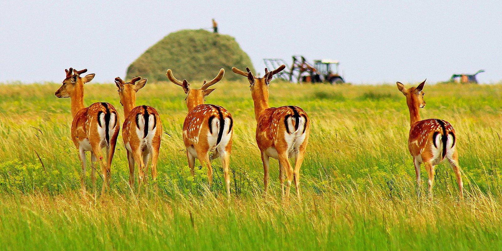 По острову вільно гуляють лані, лисиці, єнотові собаки. Це ідеальне місце для любителів дикої природи.