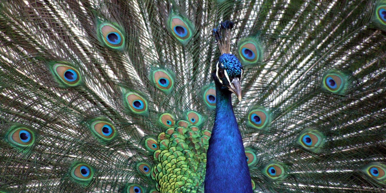 Особливе місце в заповіднику займає орнітопарк з більш ніж шістдесятьма різновидами птахів — лебедями, фазанами, качками, лелеками, страусами — африканськими, південноамериканськихми нанду і австралійськими ему.